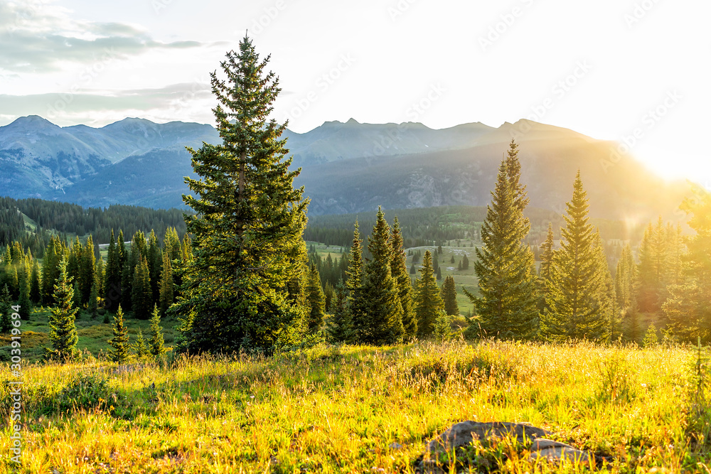 Fototapeta Sunrise sunlight landscape view of San Juan mountains in Silverton, Colorado in 2019 summer morning with meadow valley and spruce trees forest - obraz na płótnie