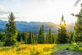Fototapeta Fototapety na ścianę - Sunrise sunlight sunburst through tree in San Juan mountains in Silverton, Colorado in 2019 summer morning with forest landscape view