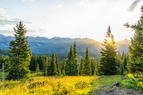 Sunrise sunlight sunburst through tree in San Juan mountains in Silverton, Colorado in 2019 summer morning with forest landscape view