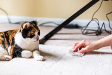 Calico Cat Face Tongue Funny Humor On Carpet Inside Indoor House Home With Hairball Vomit Stain And Woman Owner Cleaning Rubbing Paper Towel On Floor