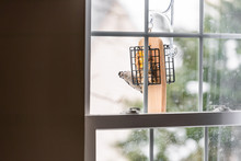 View From Glass Window Of House Of Suet Feeder Cage In Virginia And Downy Woodpecker Female Eating During Winter