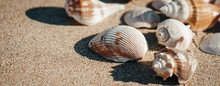 Sea Shell On Sand As Background.