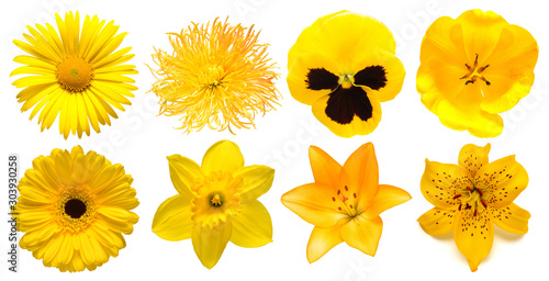 Papiers peints Pansies Collection head yellow flowers of daisy, chrysanthemum, gerbera, narcissus, tulip, pansies, lily isolated on white background. Beautiful floral delicate composition. Flat lay, top view
