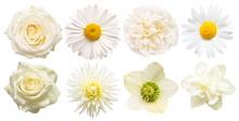 Collection Beautiful Head White Flowers Of Dahlia, Rose, Chamomile, Daffodil, Peony, Daisy, Hellebore Isolated On White Background. Beautiful Floral Delicate Composition. Flat Lay, Top View