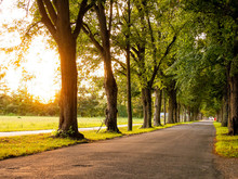 Image Of Avenue With Trees And...