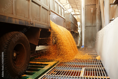 Obraz the corn unloaded - fototapety do salonu