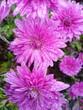 Leinwandbild Motiv flowers in the garden