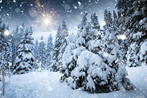 Falling snow in heavy winter. Landscape with pine trees in hoarfrost for a Christmas background. - 303942032