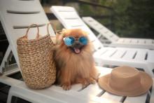 Dog On The Swimmpool