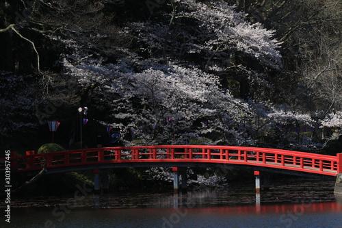 Poster Crimson 茂原公園 桜 ソメイヨシノ