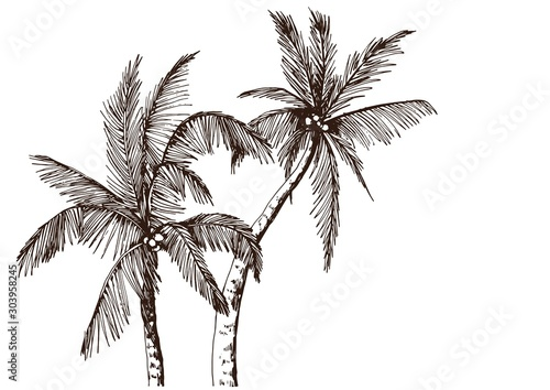 Photo Sketch of tropical palm trees. Hand drawn vector illustration.