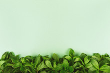 Trendy Green Background With Fresh Mint Leaves Border At The Bottom, Place For Text