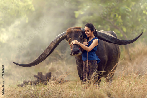 Foto  Thailand's rice farmers are embracing long horn buffalo been tweaked