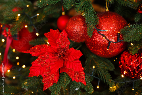 Photo Stands Roe Christmas tree in red decorations. New Year composition with spruce branches. Red christmas flower Poinsettia