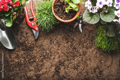 Obraz Green plants with gardening supplies on ground - fototapety do salonu