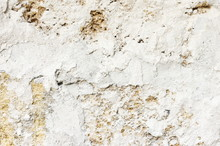 Shell Limestone With Chalky Plaster Texture