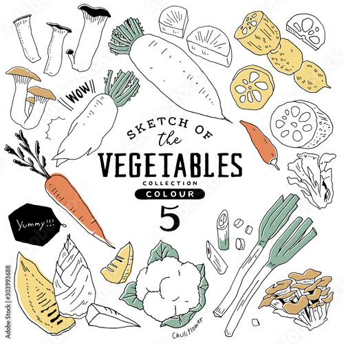 Obraz オシャレな手描き野菜セット05/カラフル - fototapety do salonu