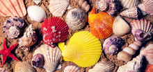 Colorful Seashells On Beach Sa...
