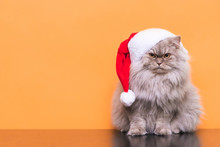 Сute Fluffy Cat In A Christma...
