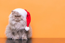 Fluffy Cat In A Christmas Hat On An Orange Background. Little Cat, Santa Is Sitting On A Colored Background. New Year's Cat.Pet On A Colored Background. Copyspace