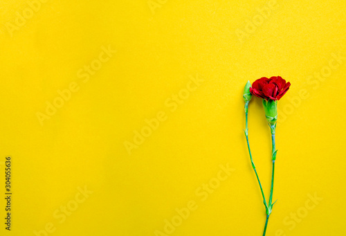 red cloves on yellow background