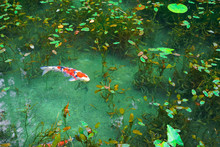 Monet's Pond, Seki City, Gifu Pref., Japan