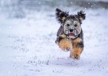 Ein Löwchen Im Winter