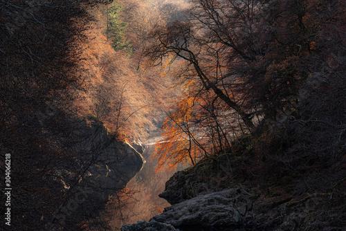 Obraz Trees on the banks of River Garry - fototapety do salonu