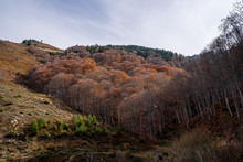 Colorful Trees In The Mountain...