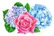 canvas print picture flowers on isolated white background, watercolor illustration, hand drawing, botanical painting, bouquet of flowers, beautiful pink rose, hydrangea