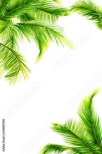summer tropical plants, palm tree on isolated white background, watercolor illustration, hand drawing, invitation, card with space for text Wall mural