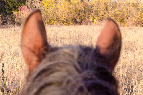 ears and head of a horse against a landscape Canvas Print