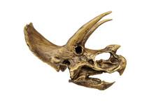 Fossil Skull Of Dinosaur Three...