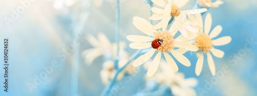 Photographie Yellow daisies with a ladybug in the sunlight against a blue sky, border