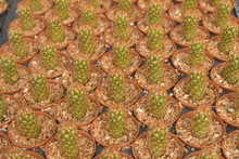Cactus, Cactus Background, Cac...