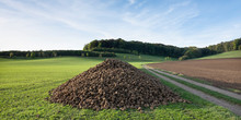 Large Pile Of Beets In Rural Landscape Of South Limburg In The Netherlands