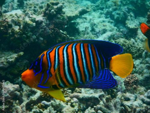 Fototapety, obrazy: Fisch