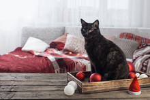 Black Cat With Christmas Ball On Wooden Table Indoor