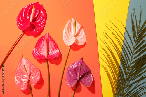 Photo Palm leaf with colorful anthurium flowers on trendy colorful background