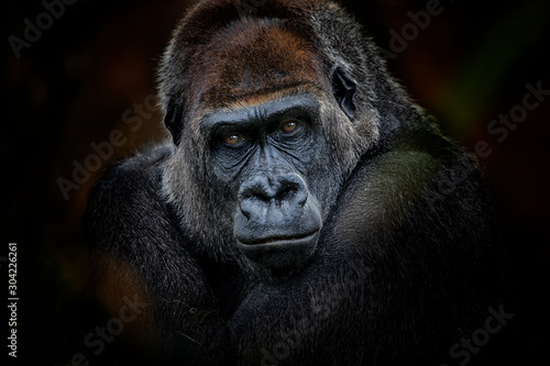 Photo gorilla look