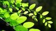 Fresh green leaf in front sunlight