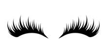 Eyelashes On White Background
