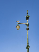 Seagull Leaning On Top Of A La...