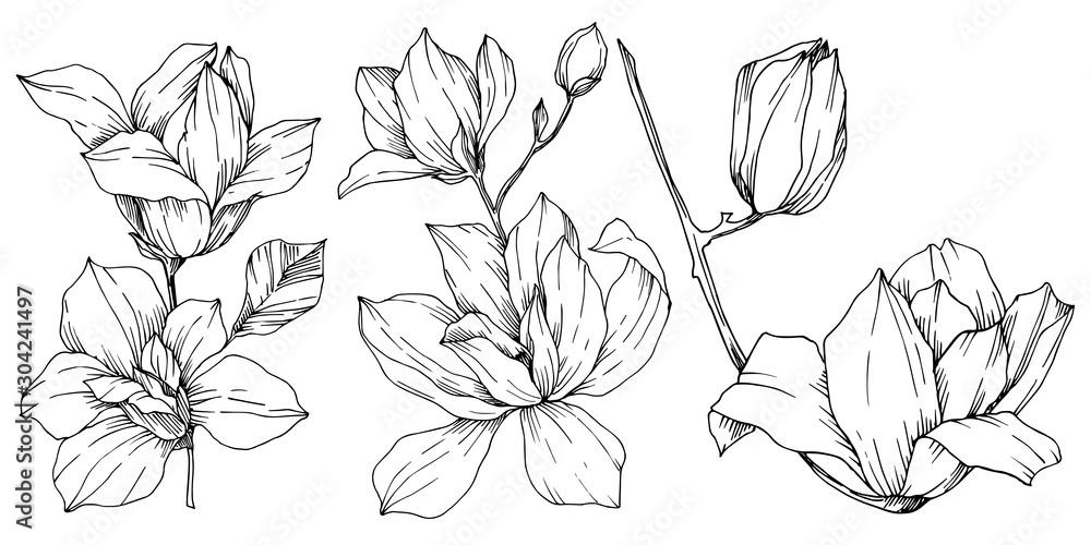 Fototapety, obrazy: Vector Magnolia floral botanical flowers. Black and white engraved ink art. Isolated magnolia illustration element.