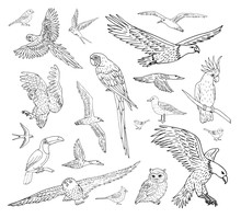 Vector Set Bundle Of Different Hand Drawn Doodle Sketch Wild Birds Isolated On White Background