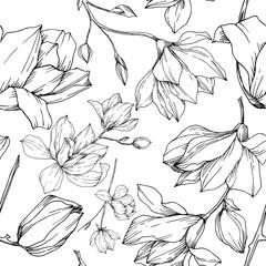 Vector Magnolia cvjetno botaničko cvijeće. Crno-bijela gravirana umjetnost tinte. Uzorak bešavne pozadine.