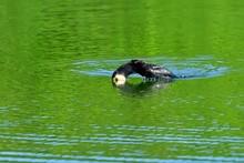 新緑映す水面の池で餌...