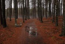 Autumn Forest Floor After Rain.