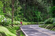 Mature Woman Walking In A Road With Hydrangea Flower Near Curitiba, Parana, Brazil