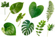 Leinwanddruck Bild set of Tropical green leaves isolated on white background.